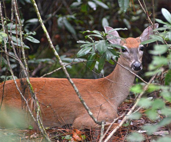 Deer crossing fingers Shawn gets one