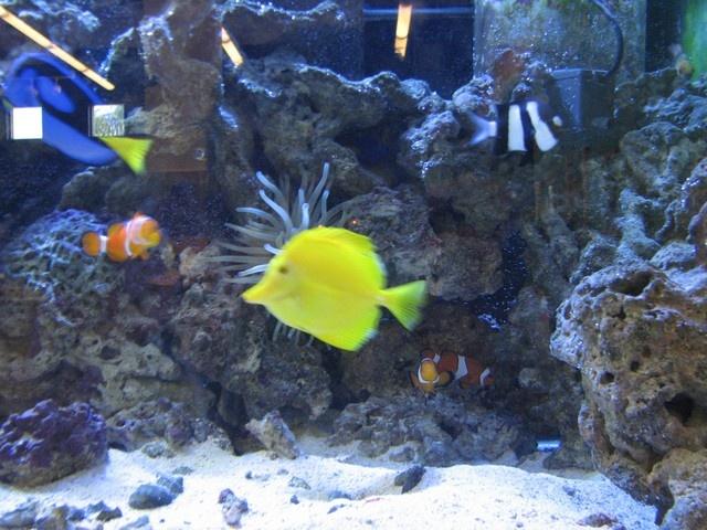 Real Life Nemo Fish Tank | www.pixshark.com - Images ...
