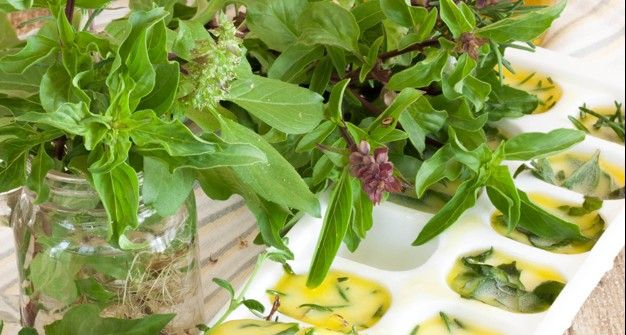 Freezing Herbs with Olive Oil for Long Lasting Flavor | How to Freeze Basil