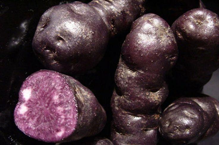 New Zealand Foods Maori potato (also known by kiwis as a purple kumara… I love kumara)
