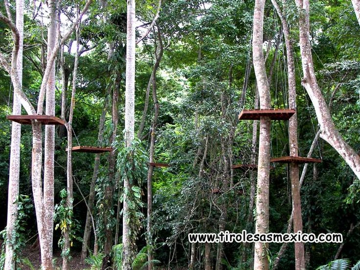 Plataformas de canopy rustico de tirolesa