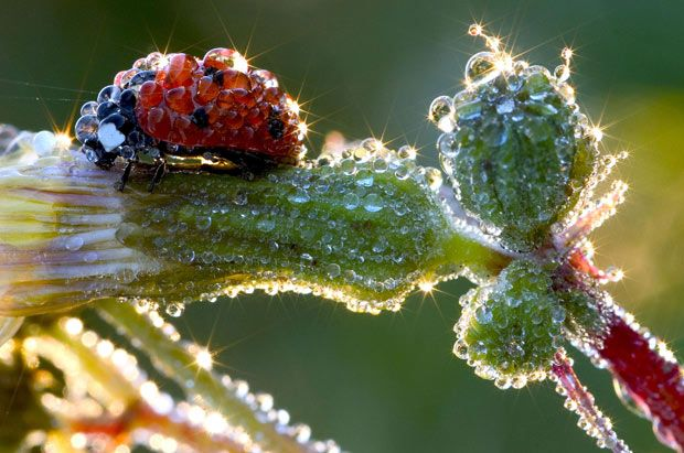 """This macro shot of a ladybird covered in beads of morning dew was captured by German photographer Jens Kolk in his back garden in Potsdam. He said: """"I went out into the garden with my camera on a cold Sunday morning. The very special light shining just the right way led to to dozens of little sunstars."""""""