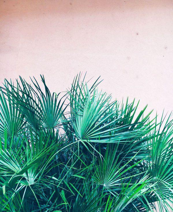 #greenplantpinkwall #pinkwall