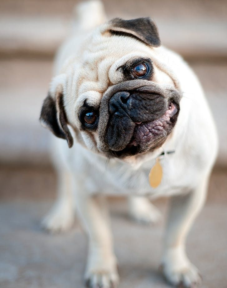 The Best Dogs For Older Folks Best Apartment Dogs Popular Dog