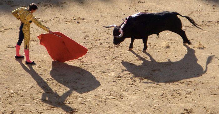 Touro se recusa a atacar pano vermelho e é xingado de ladrão por brasileiros na Espanha