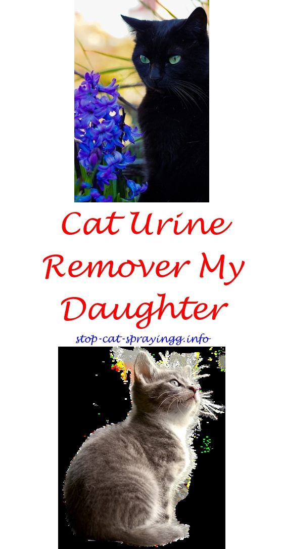 How Do You Stop Male Cats From Spraying | Cats | Pinterest | Sprays ...