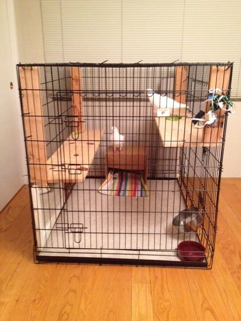 Extra large dog crate as indoor pigeon cage