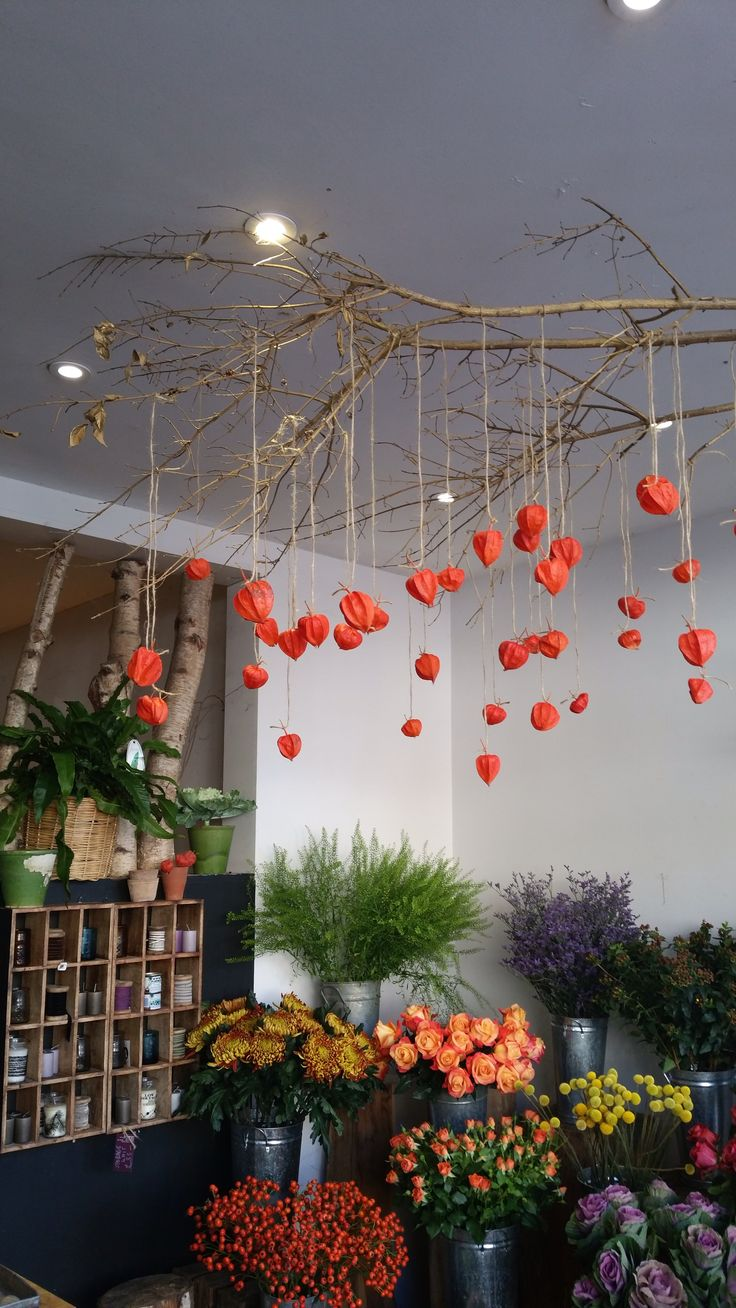 Our halloween decorations have gone up. Hanging physalis.