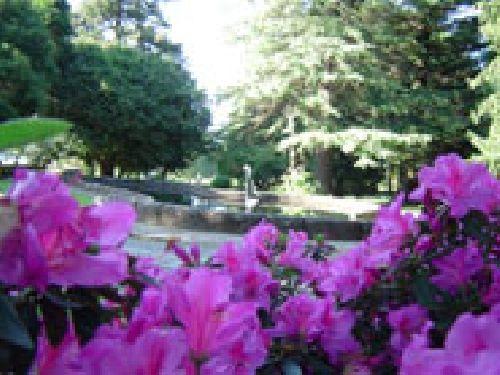Parque botánico el Castillo de Soutomaior en Pontevedra