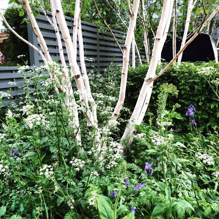The 8 best perfect-for-privacy garden trees