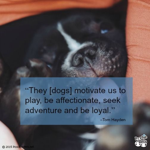 Pooch Inspiration | Dog Quotes from Poochie-Pets http://poochie-pets.net/pooch-inspiration-dog-quotes-51/