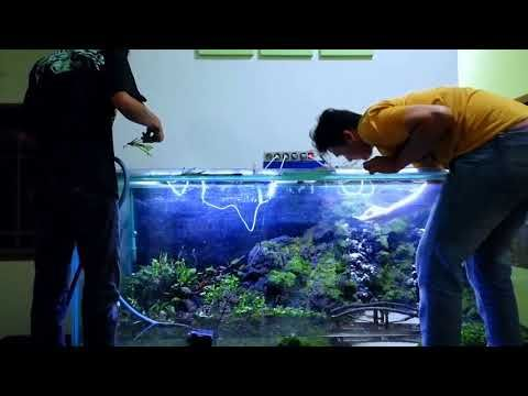 Aquascape Ideas Aquascape Tema Forest