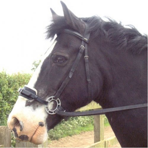 Hackamore Bitless Bridles for Sale | Western Hackamores ...