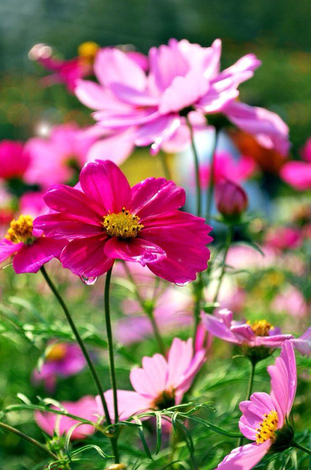 154 besten ☆Flower☆ Bilder auf Pinterest | Schöne blumen ...