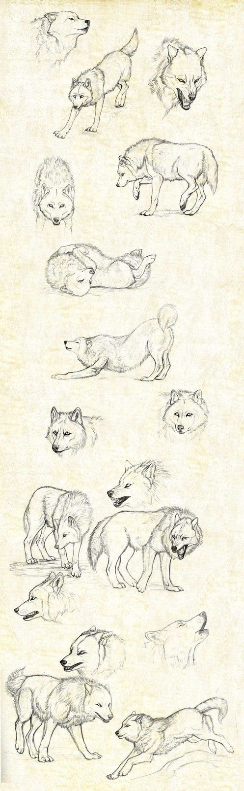 sketches_wolfs by Anisis on DeviantArt