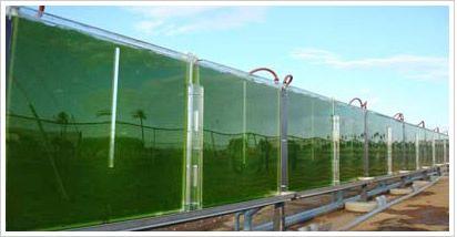 Algae Oil Penny Stocks Could Power Higher - Penny Stocks