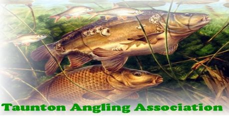 King Stanley Pond - Taunton Angling Association - King Stanley Pond is a mixed coarse fishery controlled by Taunton Angling Association. King Stanley Pond is situated on the edge of Taunton, just a fe... Check more at http://carpfishinglakes.com/item/king-stanley-pond-taunton-angling-association/