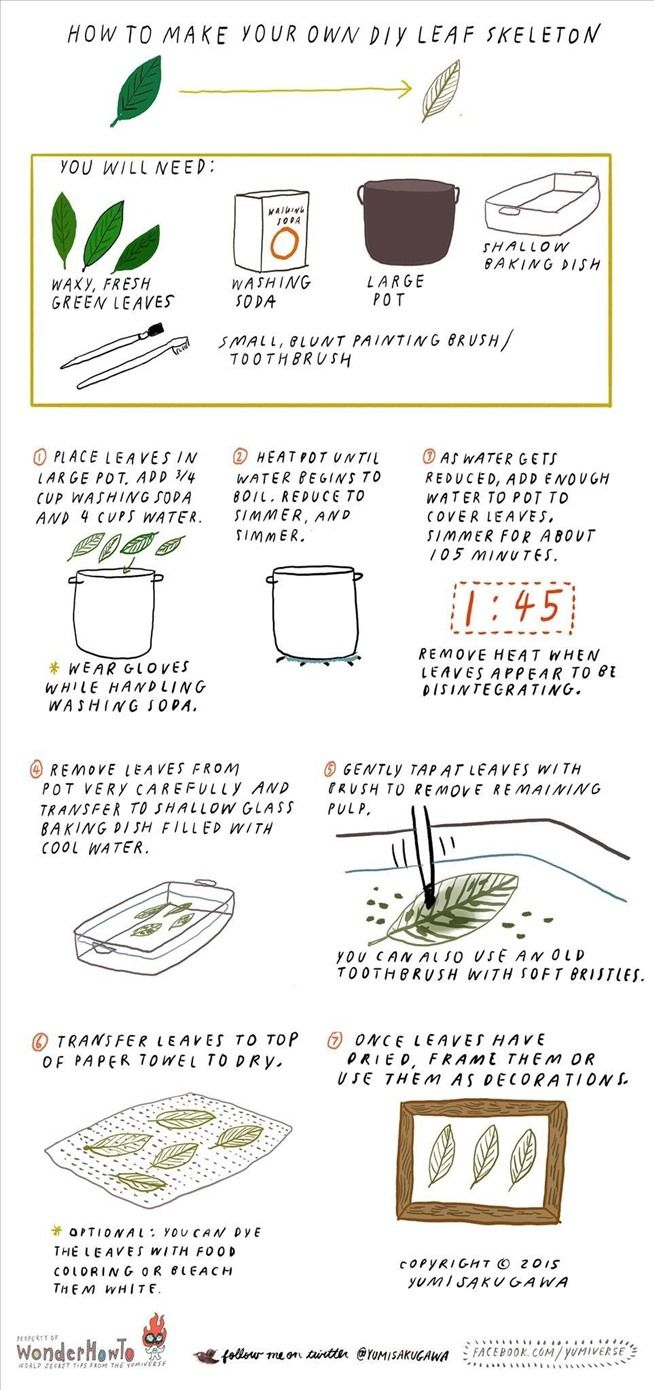 How to Make Your Own DIY Leaf Skeleton « The Secret Yumiverse