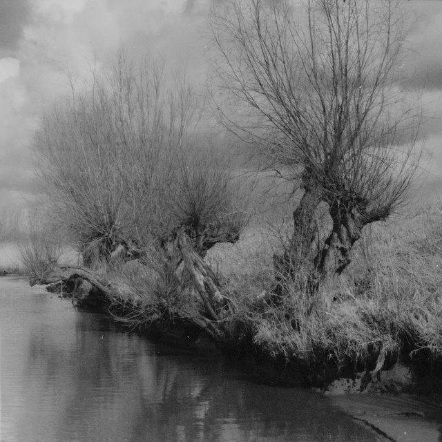 old willows along the Allemanshaven - Spijkenisse - the Netherlands by Frans van der Lelie, via Flickr