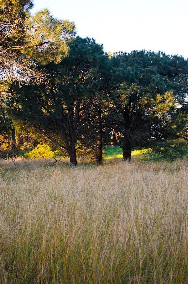 Sydney Centennial Park | At Down Under | Viviane Perenyi