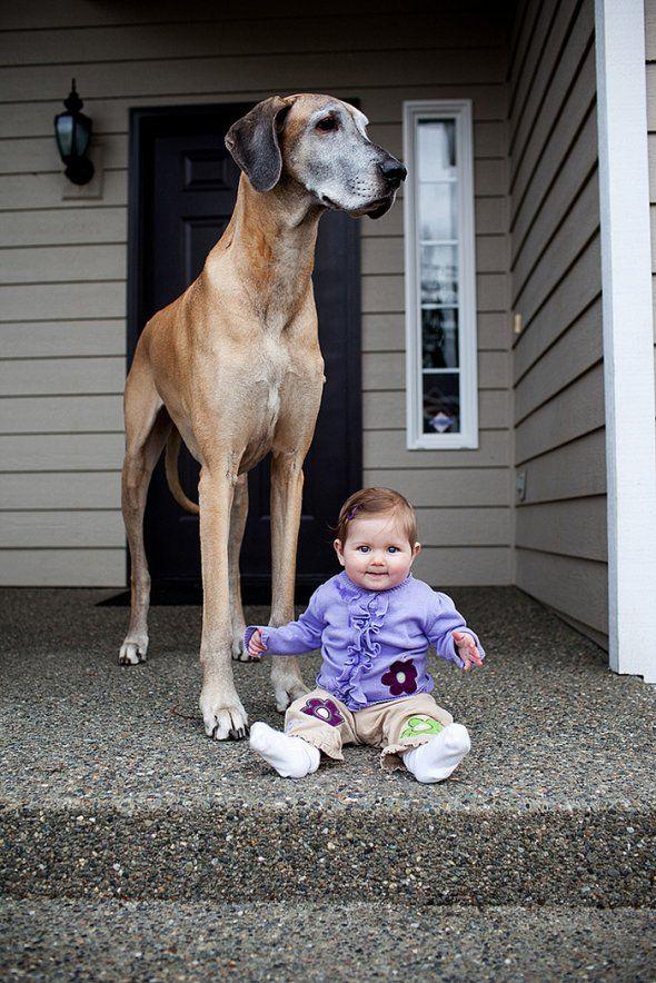 Kleine kindjes, grote honden