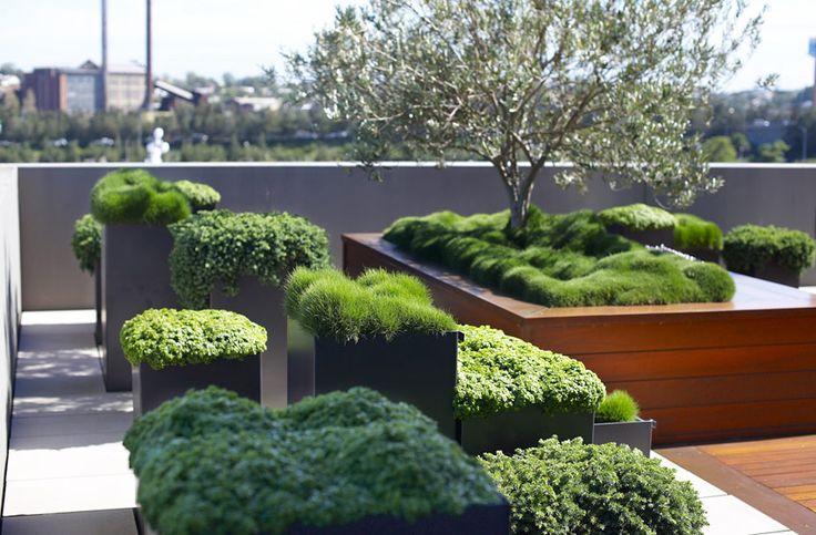 Outdoor Terraces in Glebe, Australia by Secret Gardens