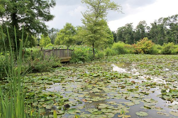 25 Best Ideas About Kenilworth Aquatic Gardens On Pinterest Beautiful Flowers Pictures Lotus