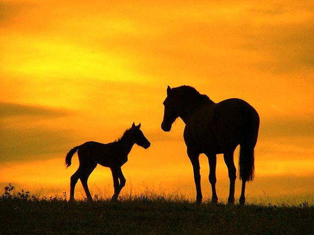Puesta de sol con caballos