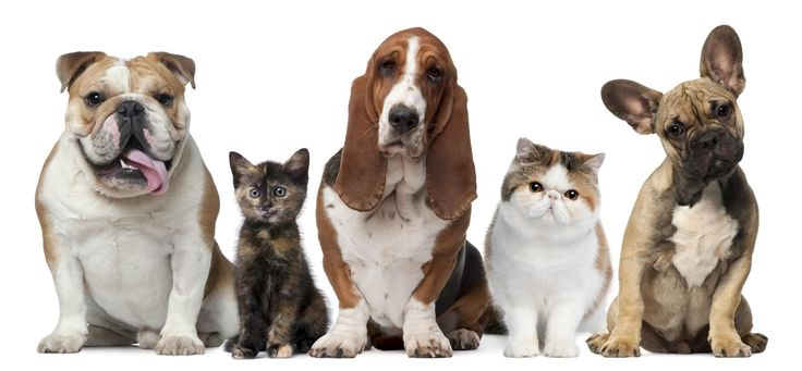 (Photo: Thinkstock) The right way to calculate your pet's, ' human age' (Don't just multiply by 7)