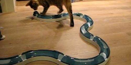 Drie katten krijgen een nieuw speeltje. Het is een plastiek koker met daarin een balletje. Via de gaatjes in de koker kunnen ze het balletje bewegen.