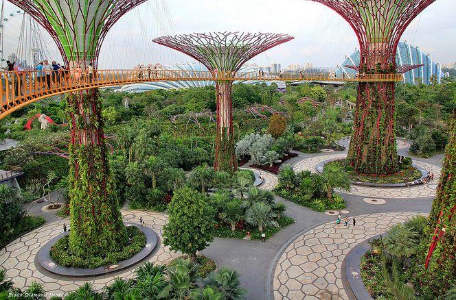 Jardins botânicos de Cingapura