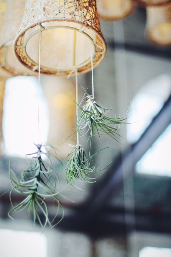 Decor Inspiration: Decorating With Air Plants   Free People Blog #freepeople