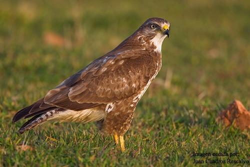 Observacion de aves - Birding