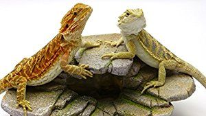 7 Best Bearded Dragon Accessories Images On Pinterest Bearded Dragon Pet Supplies And Dragon