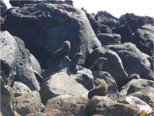 Seal tours around Cape Bridgewater - Bridgewater Bay Cafe