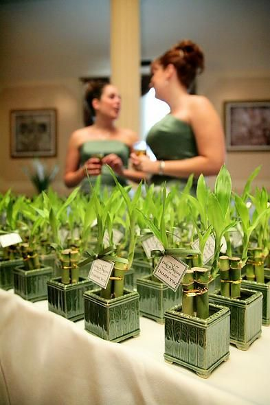 Bamboo favors, could double as centerpieces