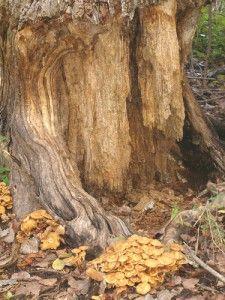 paper termites