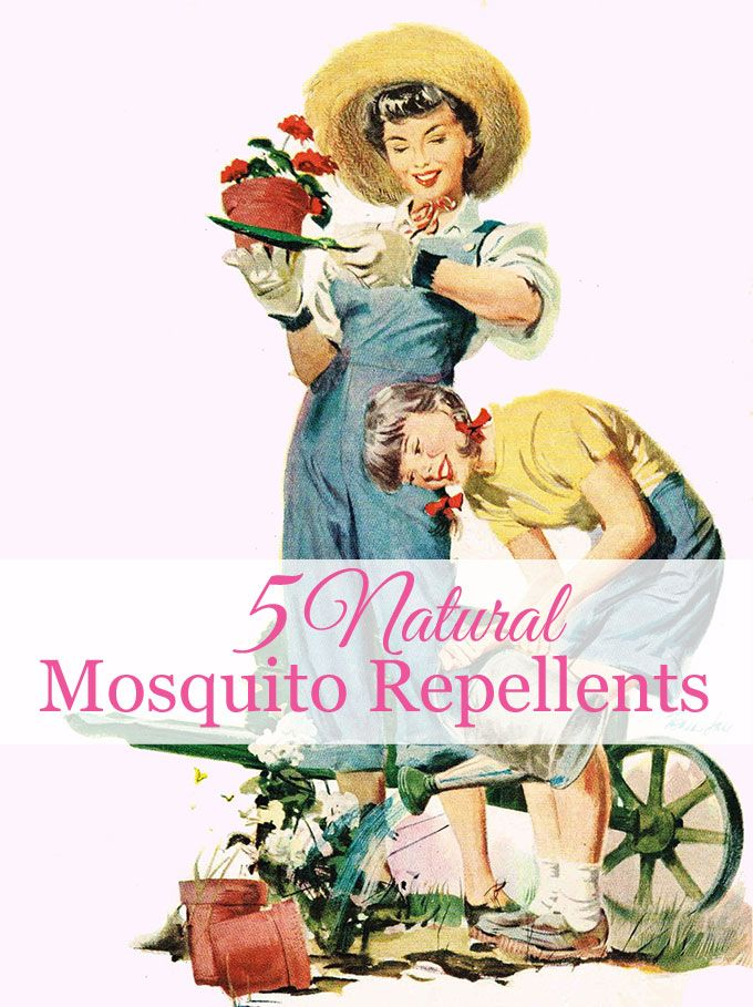 Best Natural Mosquito Repellant Ideas On Pinterest