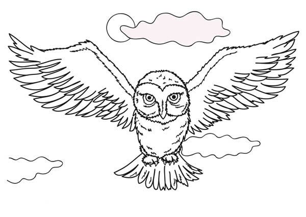 Owl Lying Owl In The Dark Coloring Page Jpg Owl Coloring