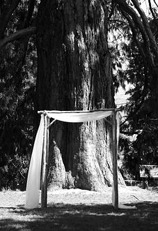 Wedding decoration hire queenstown choice image wedding dress 35 best wedding ceremony ideas images on pinterest receptions wedding and event prop and decoration hire junglespirit Images