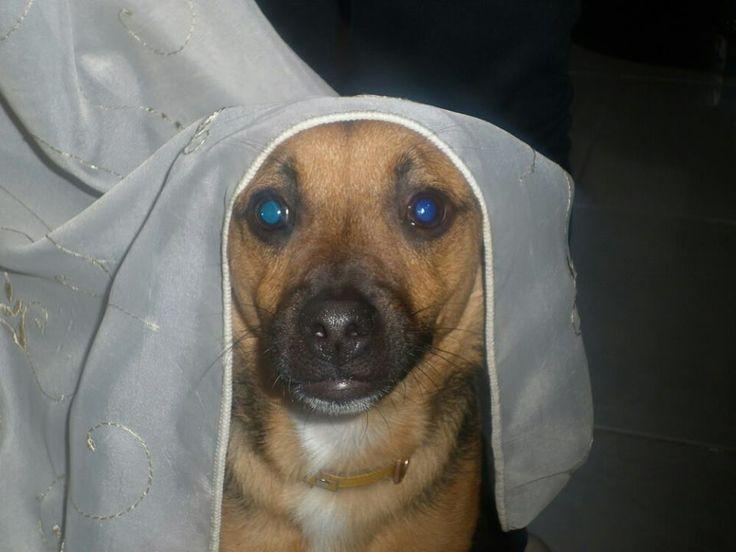Marian dog