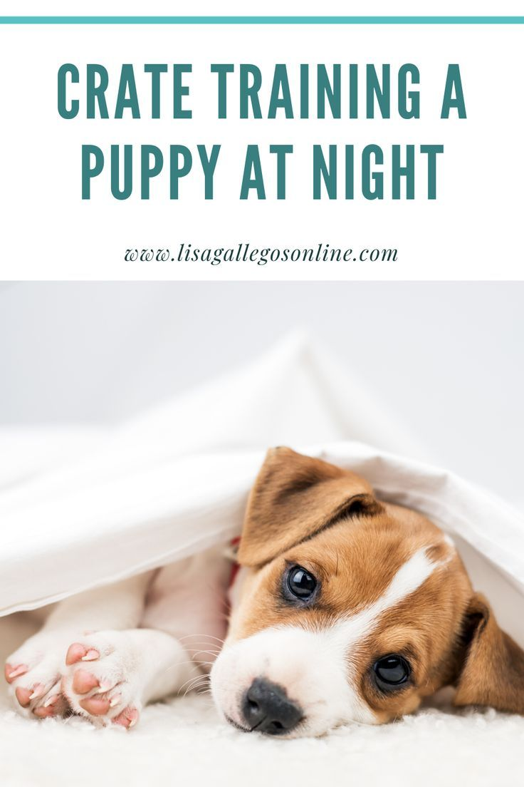 Crate Training A Puppy At Night Read On For A Step By Step