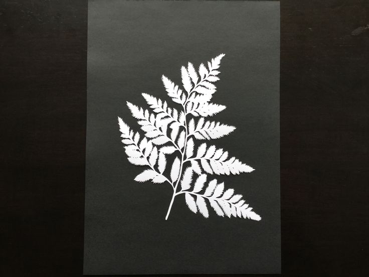 Fern paper cut. The black paper behind it is A4 to give an idea of size.