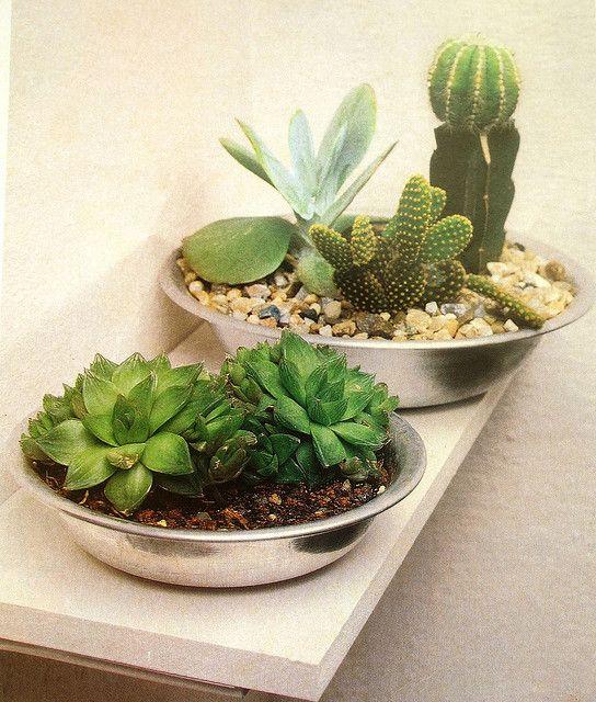 25 Best Ideas About Mini Cactus Garden On Pinterest