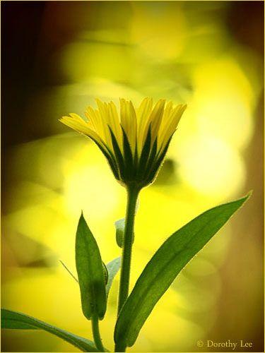 Flowers: Feeling YELLOW Mellow Feelings Green Forever Nature ...