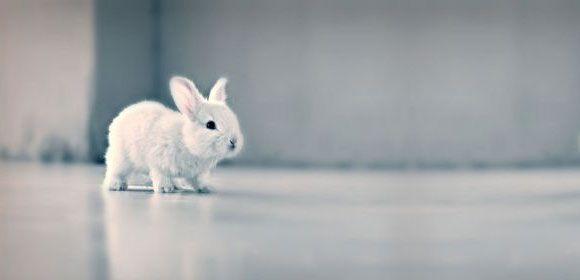 małe króliczki