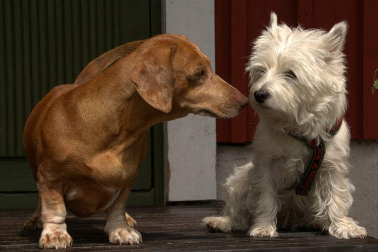 Strandhagen´s Hilda is taking good care of Elli who is guest at Strandhagen BB.
