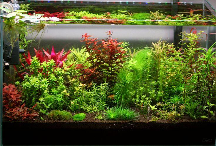 Image Result For Freshwater Aquarium