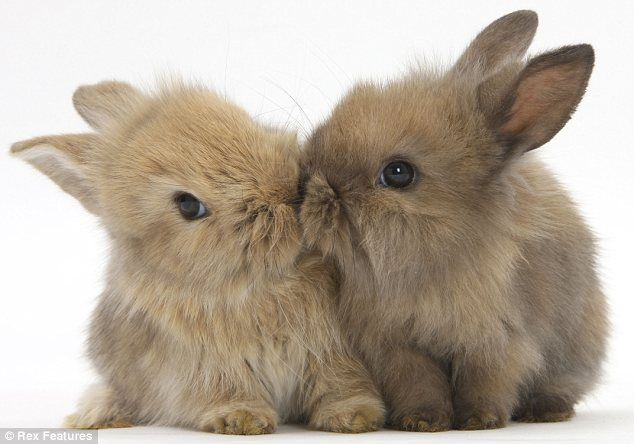Close: This double-act of baby bunnies is certainly not camera-shy