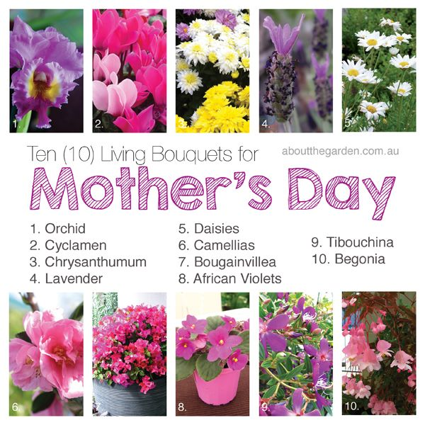 17 Best Images About Mothers Day Plants Flower Garden